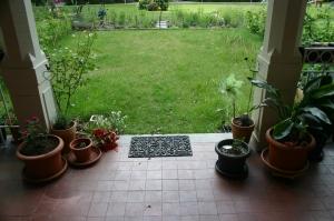 grün-gelber Rasen, büschige Rose auf links, wachsende Olive im Topf auf Rechts, Strelizie im Topf und leicht verwelkte Blumen in einer Vase auf dem Rasen (dort können sie ihre Blätter ruhig verlieren)